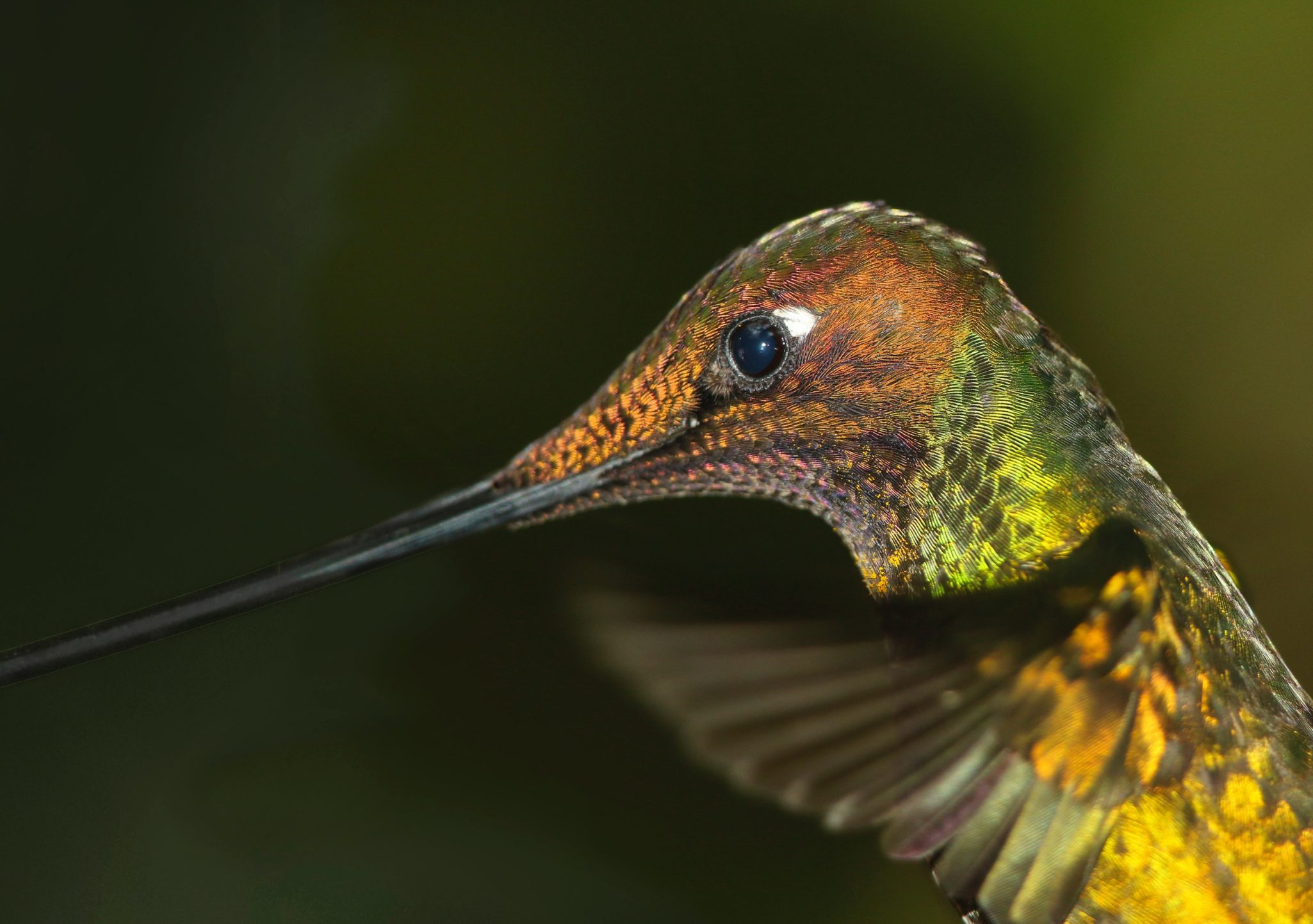 Ekvádor dovolená