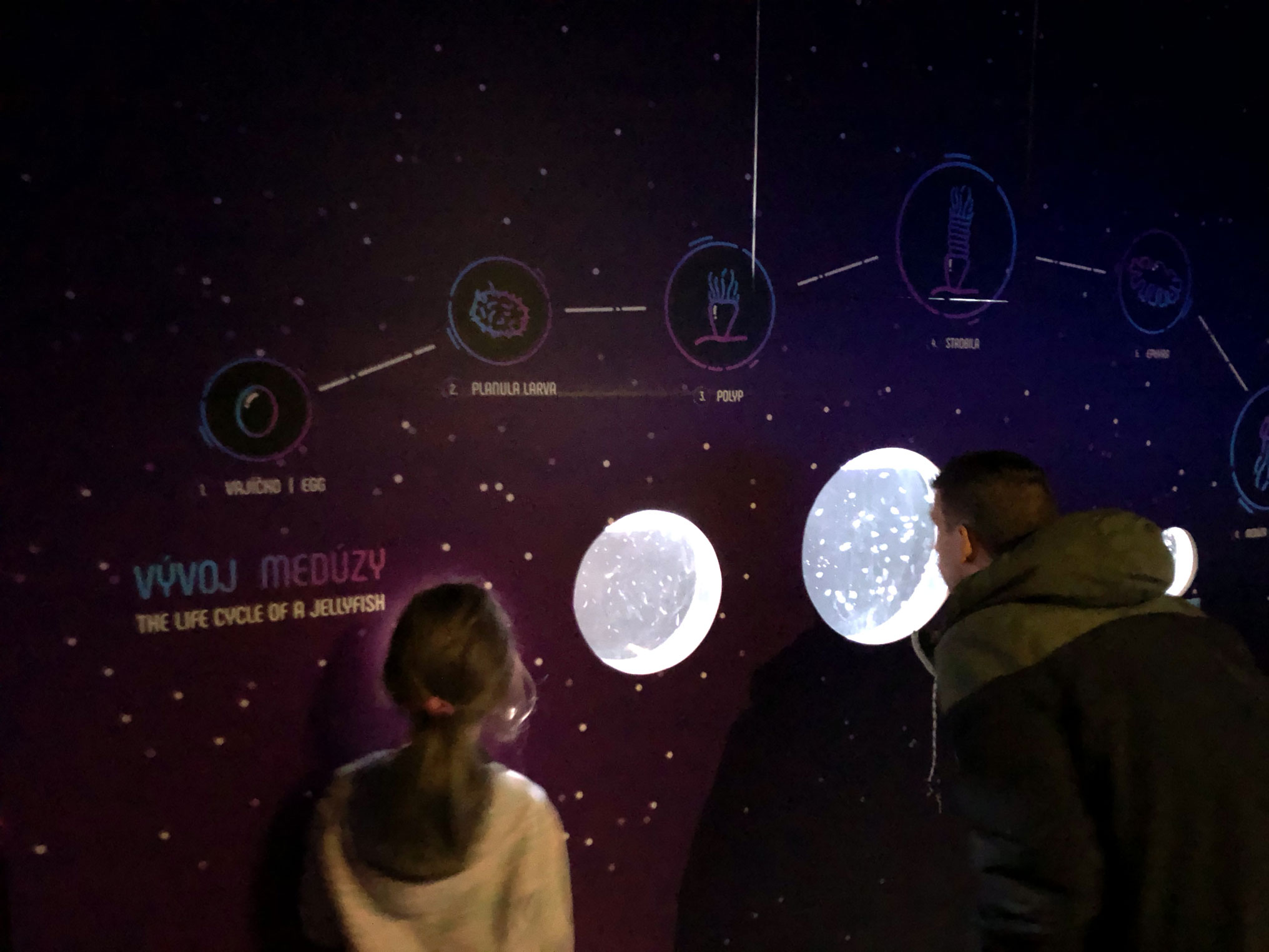 Vývoj medúzy Praha